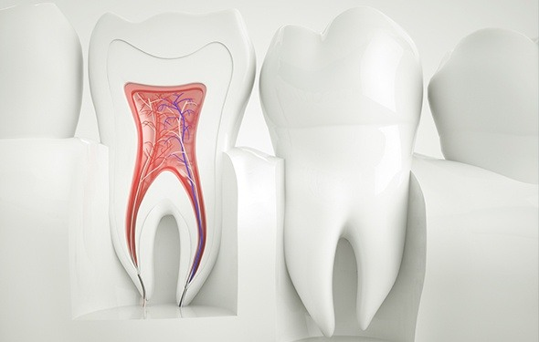 Animation of the inside of the tooth